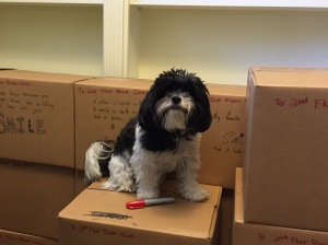 delilah-on-book-boxes